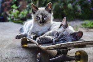 cat-1022999_1280