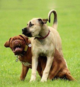 dog-868987_640