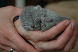 cat-448339_1280